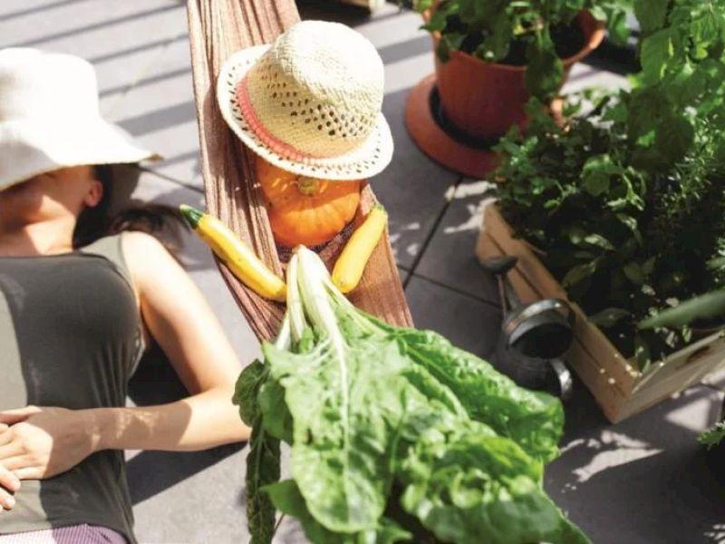 Salat, Beeren, Gemüse: Garten am Balkon