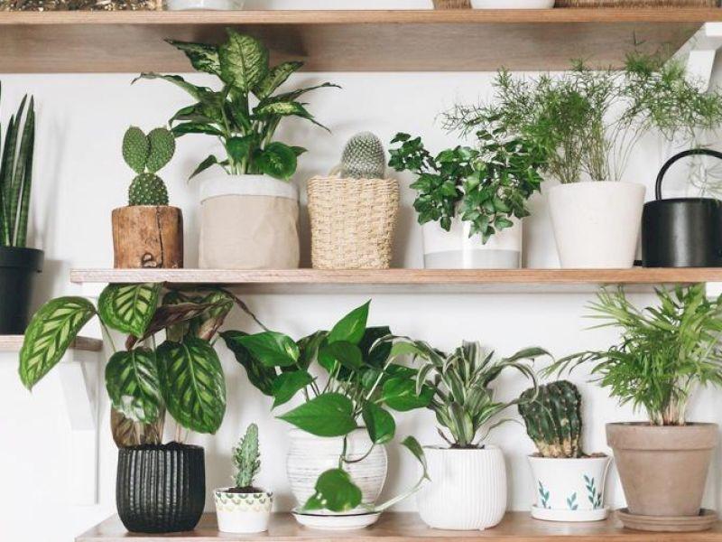 Zimmerpflanzen-Experten verraten wie Grünlinge überleben