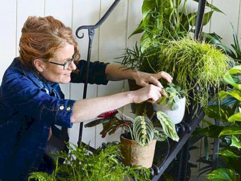 Zimmerpflanzen: Die richtige Pflege für zu Hause