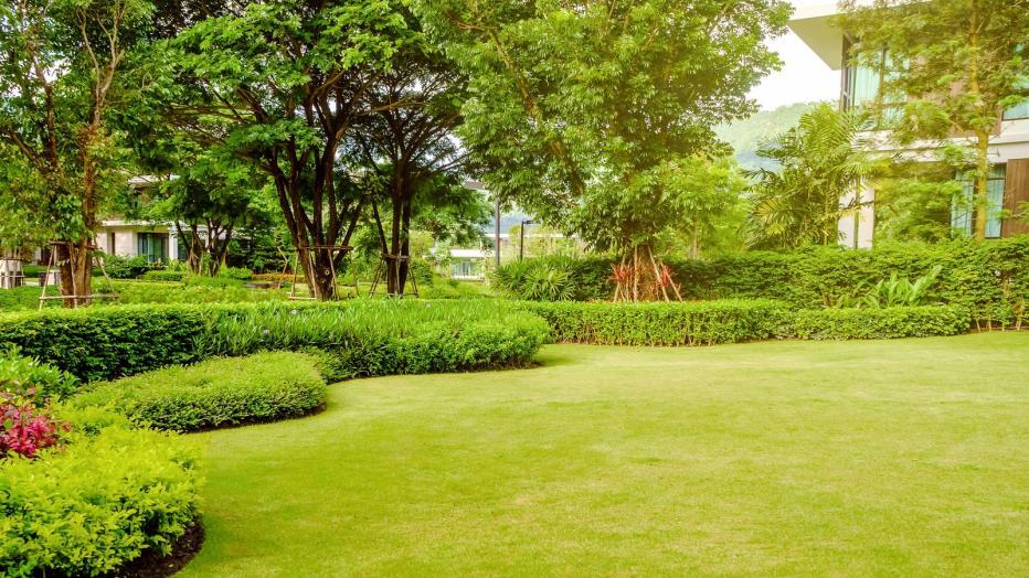 Rasend Schön: Pflegetipps für den perfekten Rasen im Garten