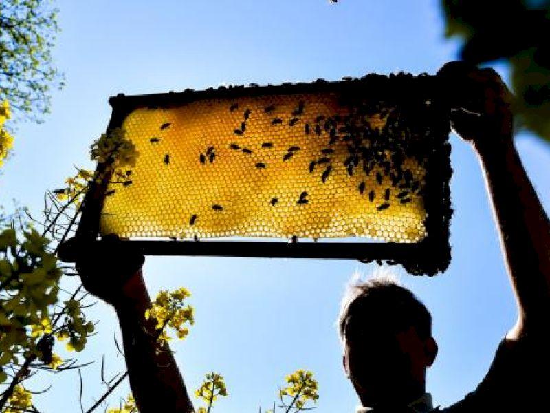 Bienenhaltung im eigenen Garten oder auf der Terrasse